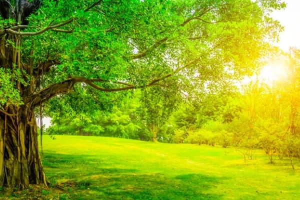 Les bienfaits de l energie des arbre en foret
