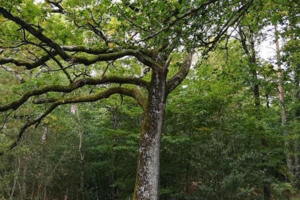 se ressourcer avec les Bains de forêt