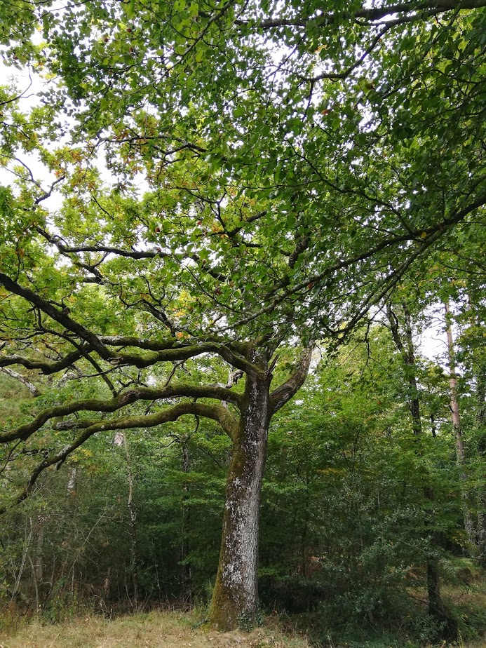 victor soins energetiques en foret arbres