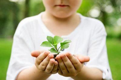 Plante-soins-energetiques-enfants